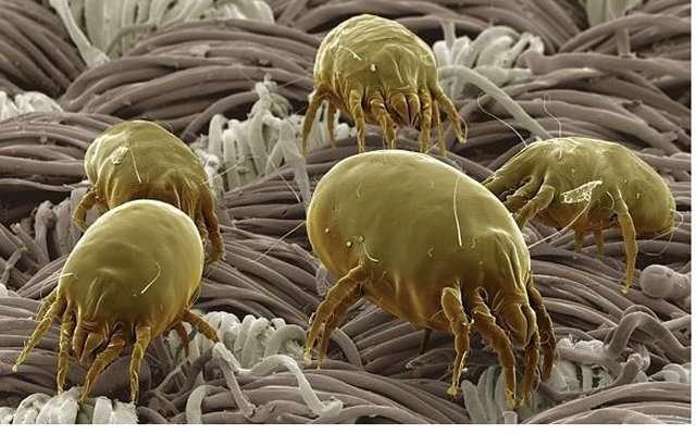 Как избавиться от аллергии на домашнюю пыль?