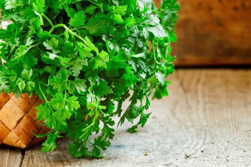 Пучок петрушки поможет оставаться красивой! Семь народных рецептов против акне, пигментных пятен и сухости