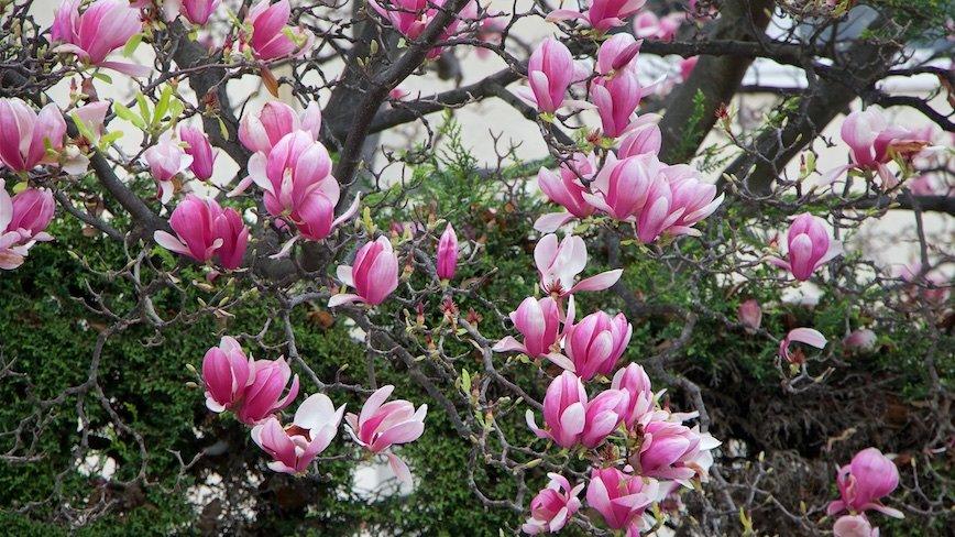 Весна идет!