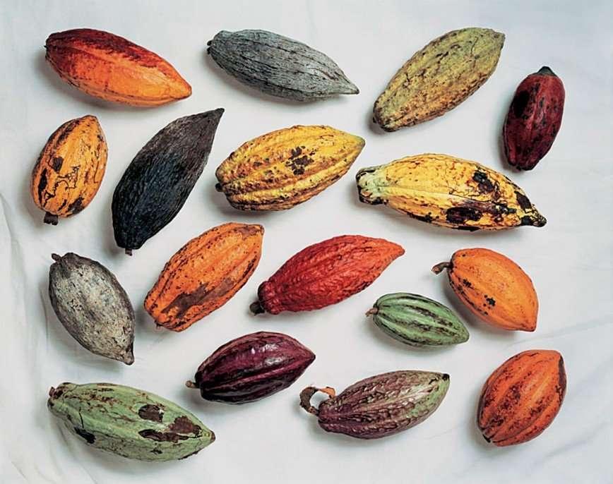 От какао-бобов до шоколада: все секреты изготовления заветного лакомства